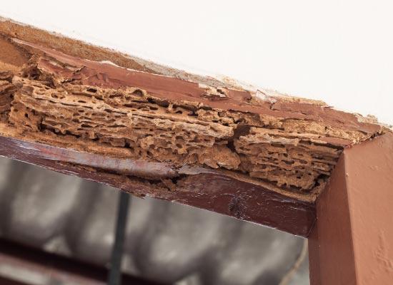 termite damage on wooden door casing